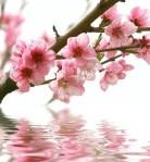 Fleurs de Bach 2
